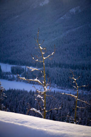 canmore: Trees on the side of a mountain,Canmore,Alberta,Canada Stock Photo
