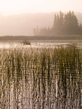 sepias: Foggy pond Stock Photo