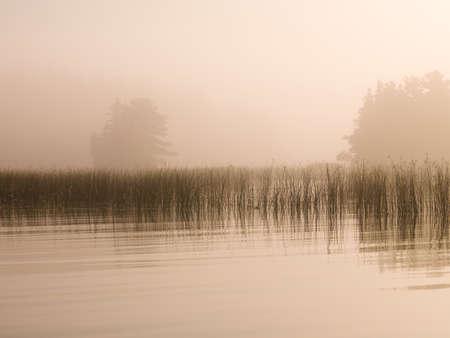 rietkraag: Lake of the Woods, Ontario, Canada, een mist bedekt meer