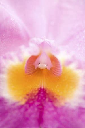 fullframes: Center of a flower