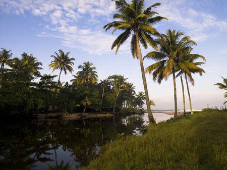 Palm trees, Kerala, India   photo
