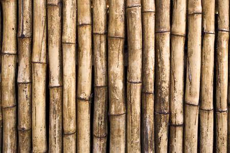 fullframes: Bamboo