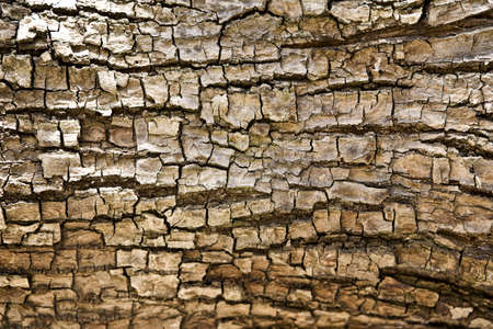 fullframes: Tree bark