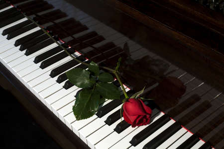 Rose on a piano Stock Photo - 7205843