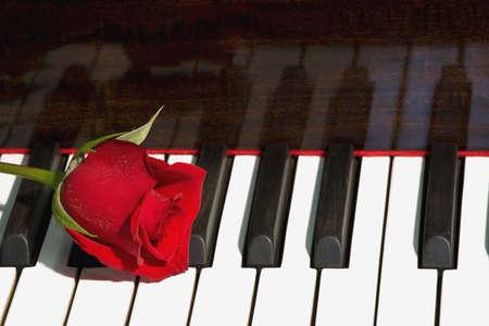 piano closeup: Rose on piano Stock Photo
