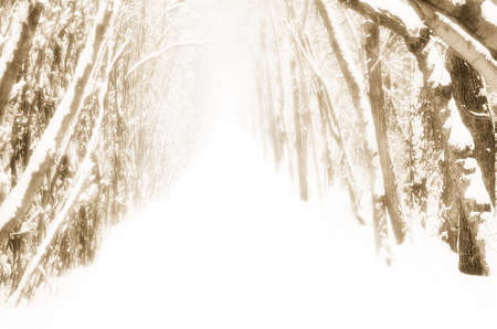 sepias: Snow-covered path in forest Stock Photo