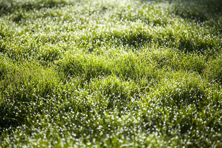 tuttle: Morning dew on grass