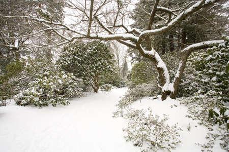 Winter snow,Portland Park,Oregon,USA   photo