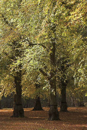chris upton: Clumber Park,Sherwood,Nottingham,England