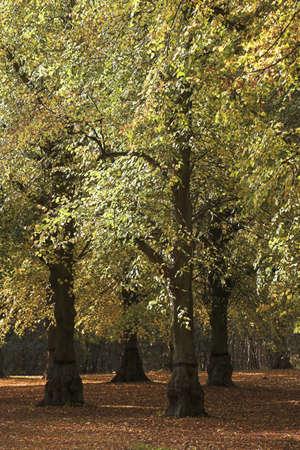 chris: Clumber Park, Sherwood, Nottingham, Inglaterra