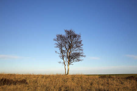 chris upton: A Lone Tree