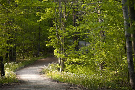 wooded: Ontario,Canada,A Tree Lined Path