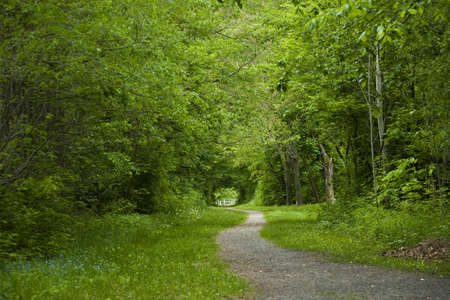wooded: Tree Lined Path