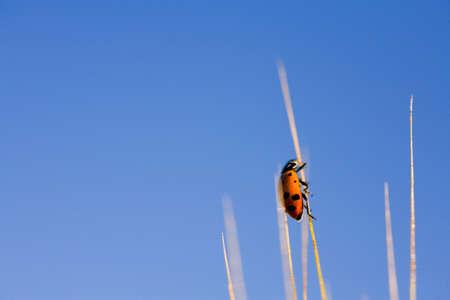 craig tuttle: Ladybug on wheat