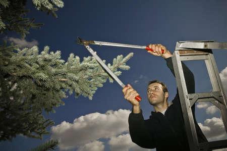 thirtysomething: Arborist pruning branches Stock Photo
