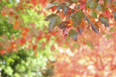 colleen: Autumn leaves