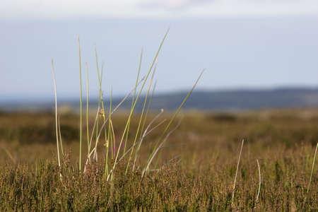 long: Long grass Stock Photo
