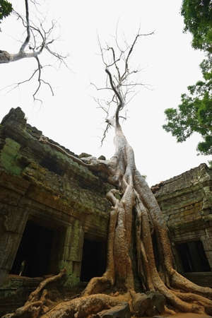 Ta Prohm temple, Angkor, Cambodia Stock Photo - 7559143