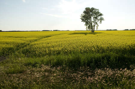 Prairies, Lake of the Woods, Ontario, Canada; Prairies Stock Photo - 7559146