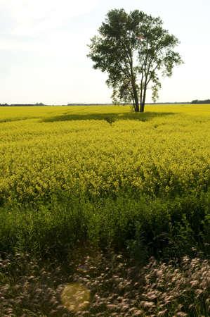 Prairies, Lake of the Woods, Ontario, Canada; Prairies Stock Photo - 7551850