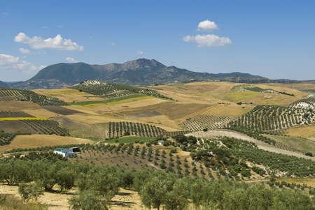 Farmland over rolling hills