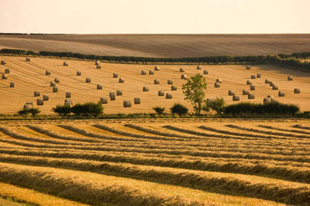 Farmer's field, North Yorkshire, England Stock Photo - 7559168