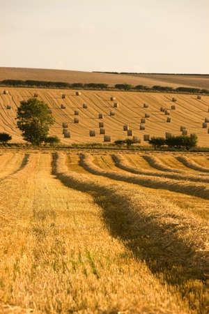 hay bale: Farmers field, North Yorkshire, England