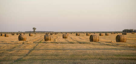 Hay bales, Manitoba, Canada Stock Photo - 7559201