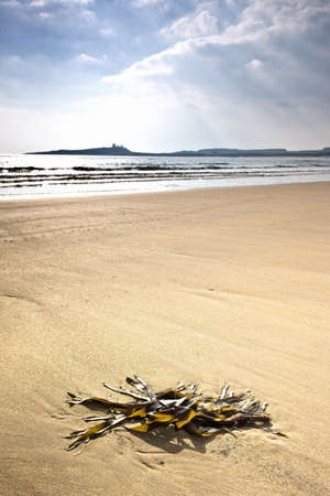 Seashore, Northumberland, England Stock Photo - 7559222