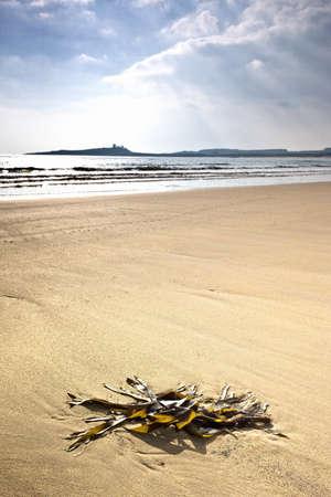 Seashore, Northumberland, England Stock Photo - 7559222
