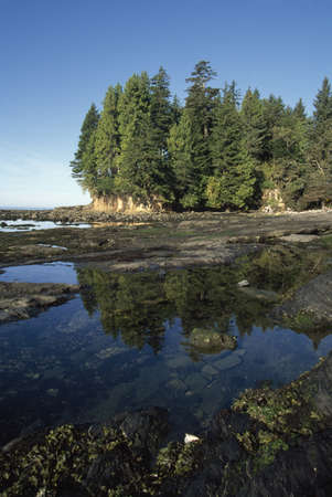 Forest on shore, Pacific Rim National Park, Vancouver Island, British Columbia, Canada Stock Photo - 7551805