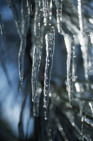 icicle: Icicles on tree branch LANG_EVOIMAGES