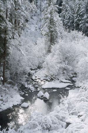 no snow: Fresh snow, Jemez National Recreation Area, New Mexico, USA
