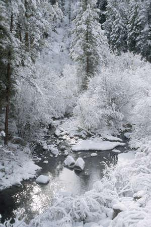 Fresh snow, Jemez National Recreation Area, New Mexico, USA Stok Fotoğraf - 7551837