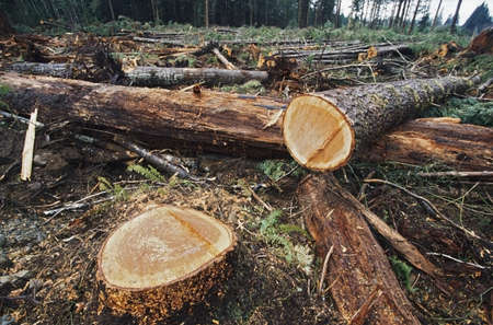 wood cut: Cut logs in logging area