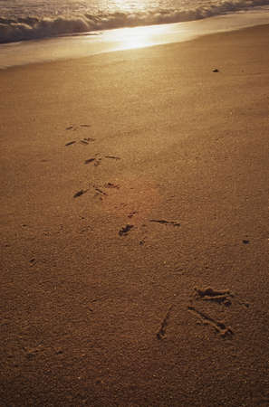 lake front: Heron tracks leading up from the surf on the beach LANG_EVOIMAGES