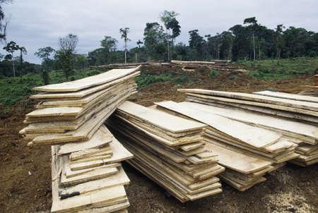 Lumber cut from rainforest, Cordillera Central, Costa Rica, Central America Stock Photo - 7551839