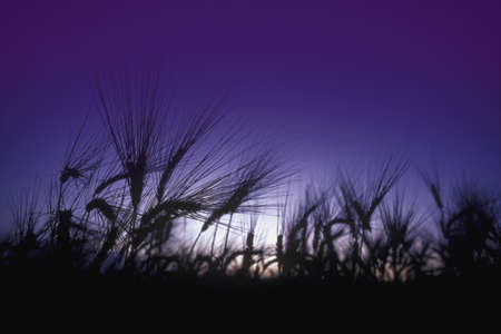 Bug's eye view of field grass with sun and blue sky in background Stock Photo - 7551835