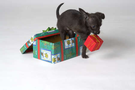 christmas backgrounds: Puppy present