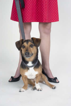 A woman with a dog on a leash Stock Photo - 7551682