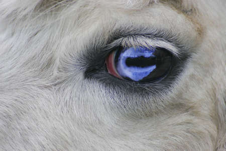 Close up of animals eye