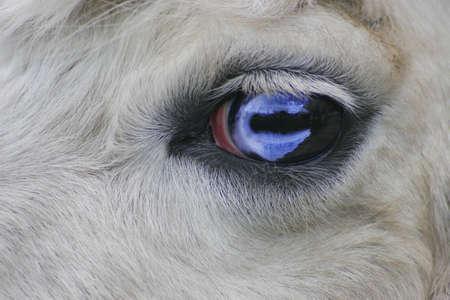 Close-up van oog van het dier
