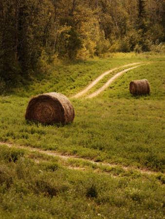 Bales of hay on a farmer's field Фото со стока