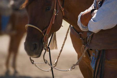 A horse's stare