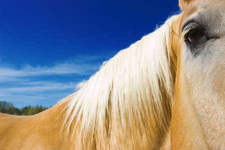 Nahaufnahme des Pferdes Gesicht