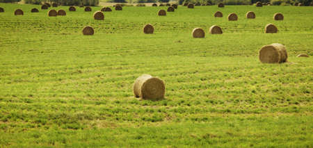 Hay bales in a farmer's field Stock Photo - 7559160