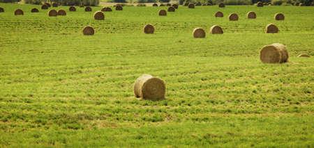 Hay bales in a farmers field