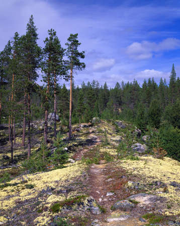 Hiking path and mossy rocks in Norways Telemark region