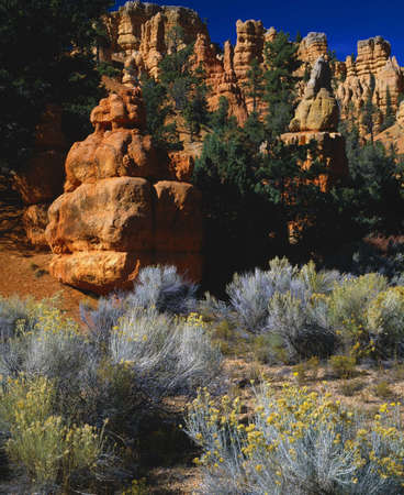 Colorful hoodoo rock formations, Red Canyon, Bryce Canyon National Park Stok Fotoğraf