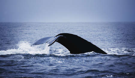 Whales tail Stock Photo